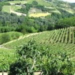 Viticulture piémontaise