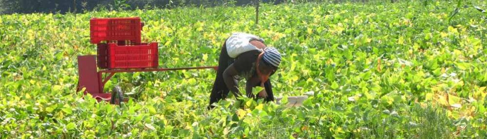 Sustainable agriculture & seasonal migrant workers