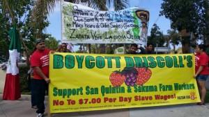 boycott driscolls